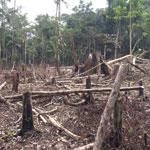 Dem tropischen Wald geht es an den Kragen: Holzkohle auf einem Markt im kongolesischen Yangambi und Brandrodung für die Landwirtschaft im Amazonas